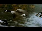 ПтицыLe peuple migrateur (2001) Трейлер №2