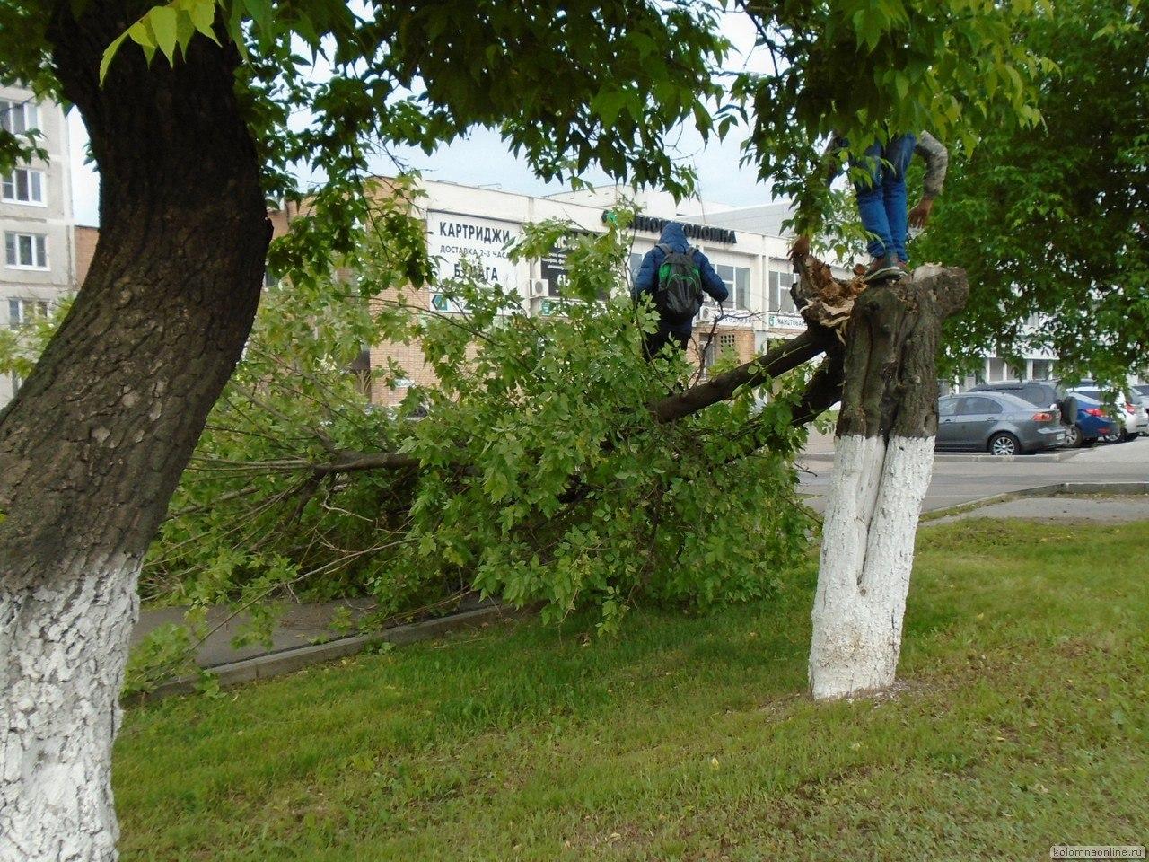 День города: сломанное дерево Фото Коломна, фото Коломны Праздник