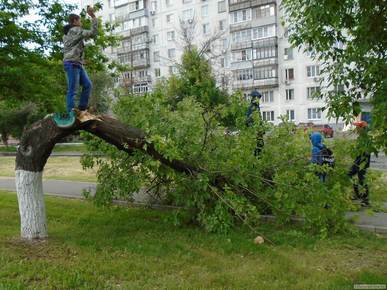 День города: сломанное дерево