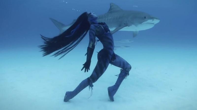 Танец с тигровыми акулами