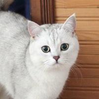 Dasha Yukishy