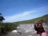 Летающие рыбы -2