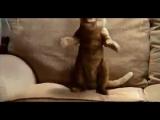 Про кота, под музыку (смешно)