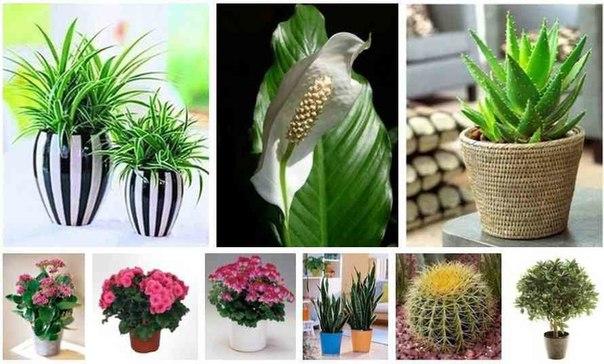 Самые популярные цветы дома