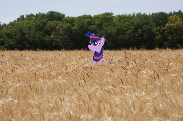 Фото №417978010 со страницы Pinkie Pie