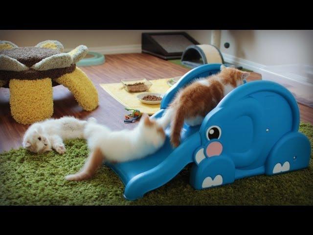 Kittens Slide Down Elephant's Trunk