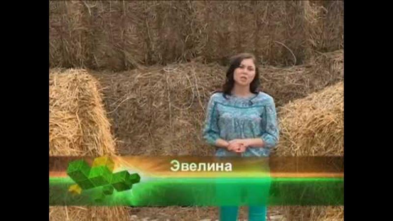 Хонер - Эвелина Абдуллина