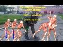 Вес и масса. Система Кадочникова в Астрахани