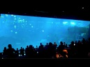 TL's Singapore Marine Park (LARGEST VIEWING TANK IN THE WORLD)! (372013)