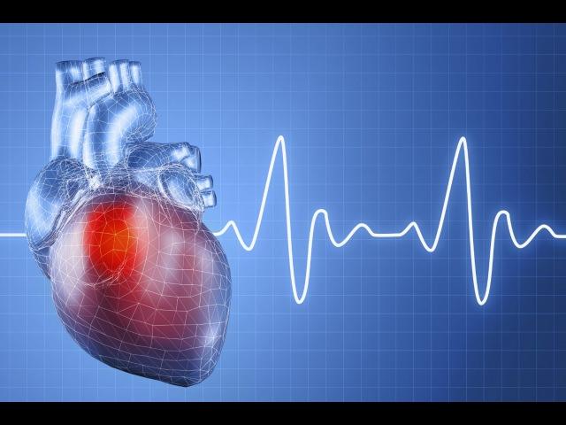 12. Кровеносная система - Сердце (8 класс) - биология, подготовка к ЕГЭ и ОГЭ