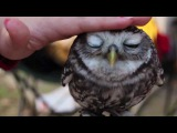 Милая сова) ОСТОРОЖНО вызывает улыбку и хорошее настроение!!!