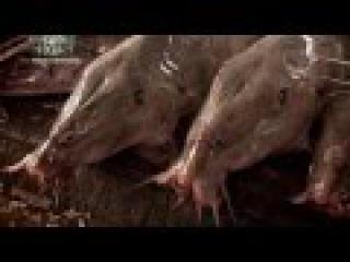 Речные монстры 2-5 - Конголезский убийца