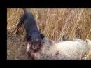 охота на барсука бобра и куницу альдо и нона