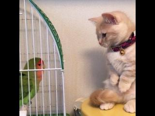 Animals & Pets on Instagram: Aww so cute  Video by @yuriyuri4mama