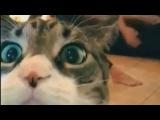 Смешные Кошки Бытие Толчки Компиляция 2016 - Animalz TV НОВОЕ Смешные Кошки видео