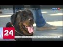 """""""Хочу домой"""": в парке Останкино искали новых хозяев бездомным собакам"""