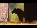 Лошадь Пржевальского. [Чернобыльская зона]