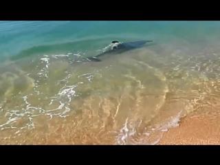 [ Збс видео ] Дельфин охотится на берегу Керчи. Такую красоту редко увидишь