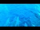 Дельфины перед носом катера!WARNING:Очень сильный писк детей!!!