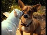 «Крошка из Беверли-Хиллз 3» на Канале Disney!