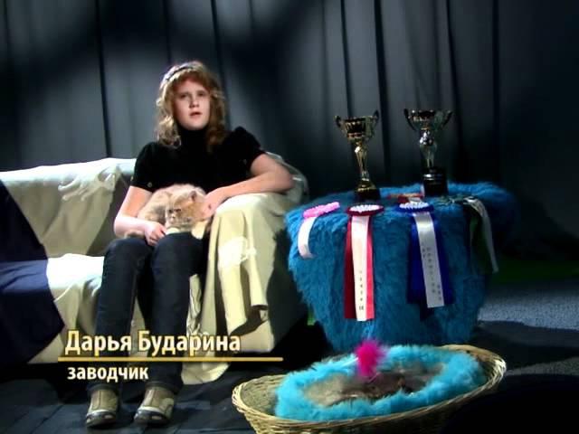 Кошачий алфавит: Селкирк рекс