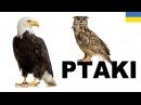 Польська для початківців - Птахи 1 (Ptaki)