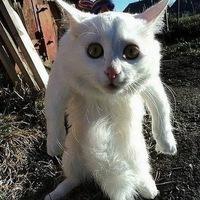 Кот Сапогах