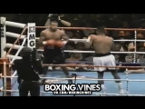 Roy vines (Boxing Vines) l vk.com/boxingvines
