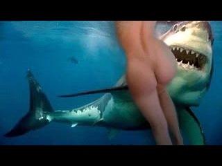 Атака акул на людей/shark attack нападение животных/жесть/ужас/хищники/видео ютуб онлайн/