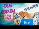 6 КАрЛиКоВыЙ ПоМеРаНсКиЙ ШпИЦ 🐶 Гетсби купили новый домик