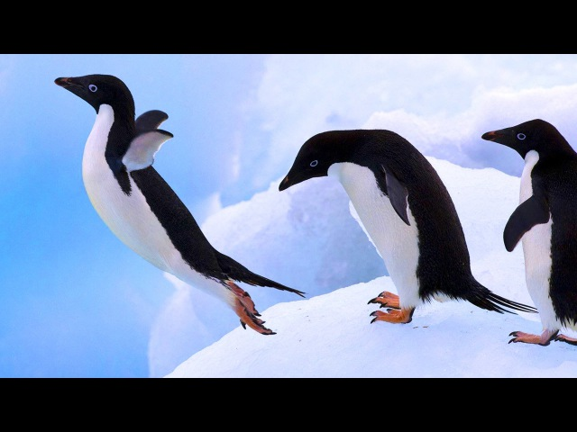 Relax Music - Cute Adorable Penguins - Sleep Relaxing Music - 2 Hours - HD 1080P