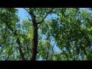 Футаж.Весенний лес.