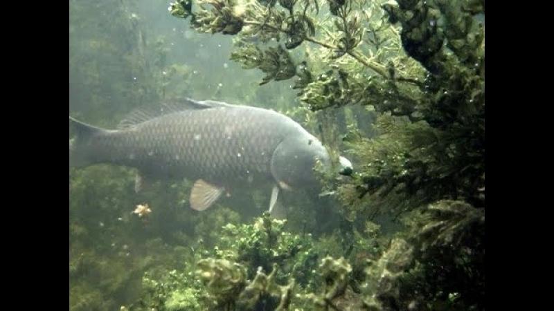 Подводная охота: Описываю тактику подводной охоты в залежке и косвенные признак...