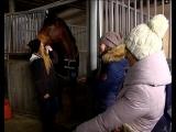 История с покупкой полицейского коня получила продолжение.  #ТКЕвразия #Первоуральск #ЕвразияТВ #Евразия