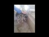 Бездомную собаку принесли в приют и впервые погладили