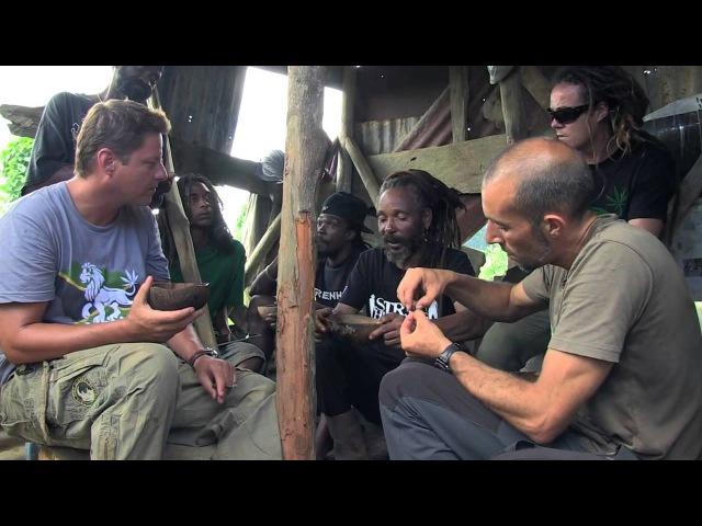 Strain Hunters Jamaica - Экспедиция на Ямайку.
