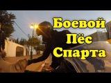 На мотоцикле по Израилю. Боевой пёс - СПАРТА!