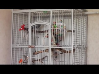 Попугай Григорий - Матершинник