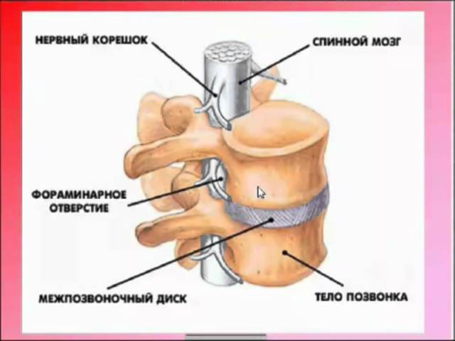 ***Эндорфинотерапия при болезнях позвоночника 1 5
