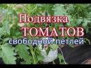 Как подвязать помидоры. Способ Свободная петля . (06.06.16)