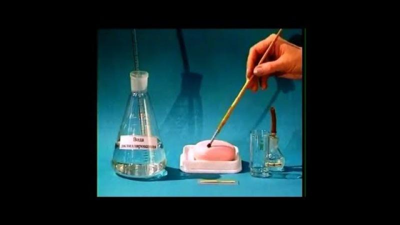 Опыты по химии. Гидролиз мыла