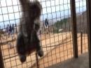 Арасияма способны ли животные на человеческие чувства