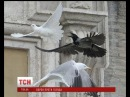 Українців збентежила погана прикмета з голубами миру