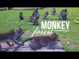 Monkey Forest 15s ♥ Убуд