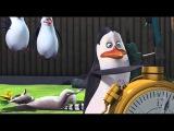 Pingwiny z Madagaskaru Czas stop.