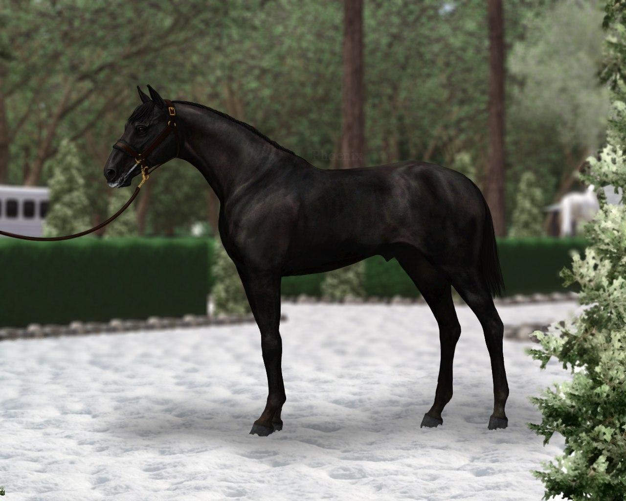 Регистрация лошадей в RHF 2 - Страница 38 Ut7UeEOzVXA