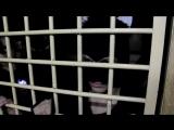 КВН Жадная омерзительная восьмерка ЧРТ РР-394 06.05.16