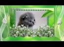 Весна 1 марта день кошек! Серенада от исполнителя Божья Коровка, Когда весна стучит в окно