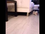 Хозяин попытался забрать у котёнка соску