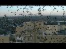 Атака клопов - нашествие насекомых в Барнауле. На Барнаул напали полчища вонючих клопов-щитников